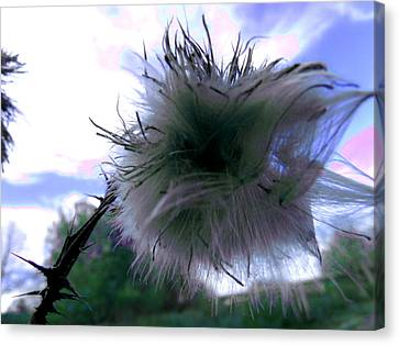 Bottomland Thistle Canvas Print