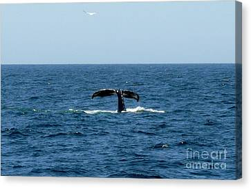 Whale Canvas Print - Bottoms Up by Paul Smith