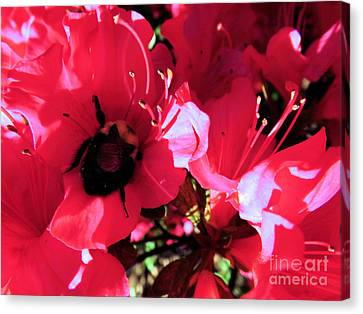 Canvas Print featuring the photograph Bottoms Up by Robyn King