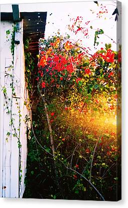 Bougainvilla  Canvas Print