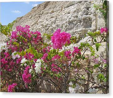 Bougainvillea At The Dead Sea Canvas Print by Esther Newman-Cohen