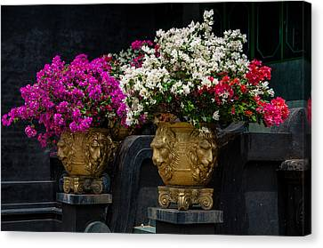 Bougainvillea At The Entrance Of Golden Temple In Dambulla  Canvas Print by Jenny Rainbow