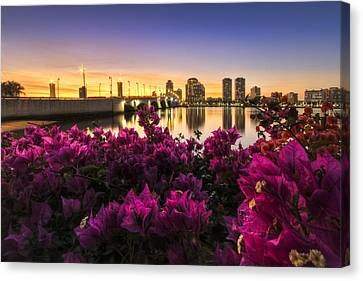 Bougainvillea On The West Palm Beach Waterway Canvas Print by Debra and Dave Vanderlaan