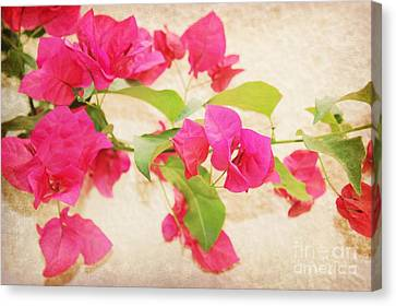 Spain Canvas Print - Bougainvillea Painted by Clare Bevan