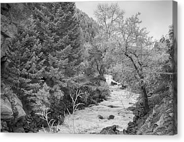 Boulder Creek Winter Wonderland Black And White Canvas Print by James BO  Insogna