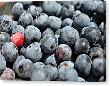 Canvas Print featuring the photograph Bountiful Blueberries by Kelly Nowak