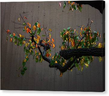 Bouquet From Autumn Leaves.three. Canvas Print by Viktor Savchenko