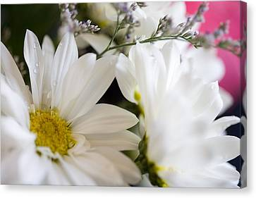 Bouquet Of Daisies Canvas Print by John Holloway