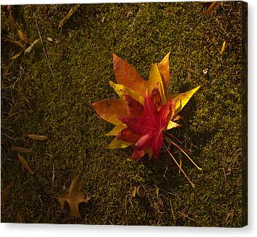 Canvas Print featuring the photograph Bouquet Of Leaves by Jose Oquendo