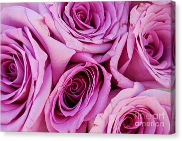 Bouquet Of Pink Roses Canvas Print by Sabine Jacobs