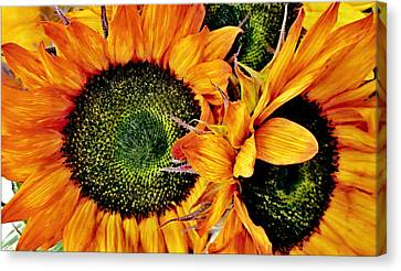 Bouquet Of Sunflowers Canvas Print by Danielle  Parent