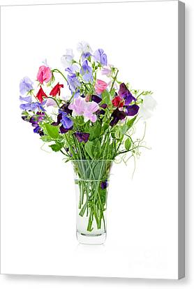 Bouquet Of Sweet Pea Flowers Canvas Print
