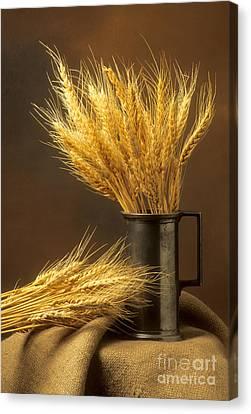 Bouquet Of Wheat Canvas Print by Bernard Jaubert