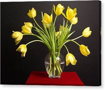 Bouquet Of Yellow Tulips In Clear Vase Against Black Background Canvas Print