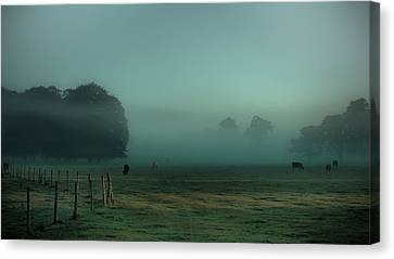 Bovines In The Mist Canvas Print by Chris Fletcher
