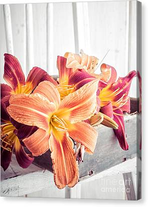 Day Lilly Canvas Print - Box Of Day-lily  by Edward Fielding