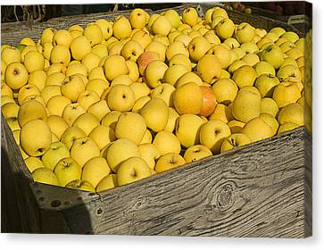 Apple Canvas Print - Box Of Golden Apples by Garry Gay