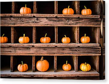 Boxed In Pumpkins Canvas Print