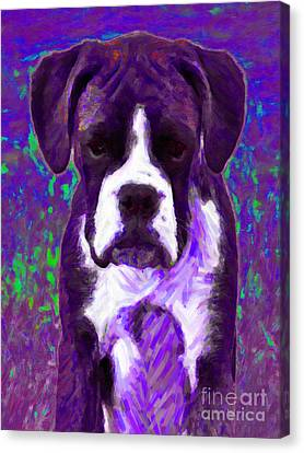 Boxer 20130126v6 Canvas Print by Wingsdomain Art and Photography