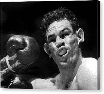Boxer Catches A Left Hook Canvas Print by Underwood Archives