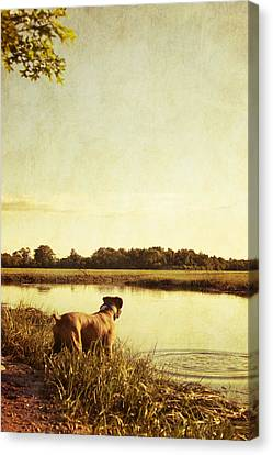 Boxer Dog By The Pond At Sunset Canvas Print by Stephanie McDowell