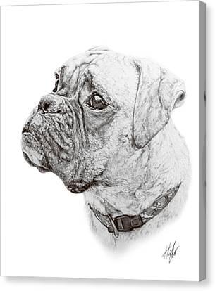 Boxer Canvas Print by Hannah Taylor
