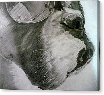 Boxer  Canvas Print by Kelly Brown