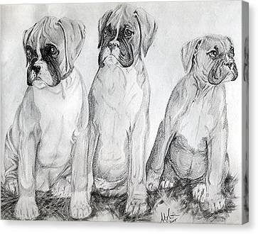 Boxer Puppy Dog Poster Print Canvas Print by Olde Time  Mercantile