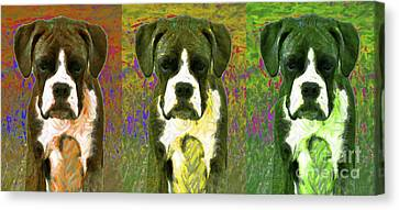 Boxer Three 20130126 Canvas Print by Wingsdomain Art and Photography