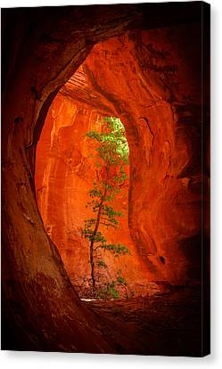 Canyon Canvas Print - Boynton Canyon 04-343 by Scott McAllister