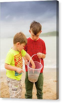 Boys Holding Crab Canvas Print by Samuel Ashfield