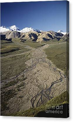 Braided River In Alaska Canvas Print by William H. Mullins