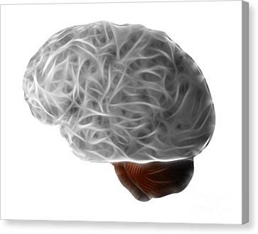 Brain Canvas Print by Michal Boubin
