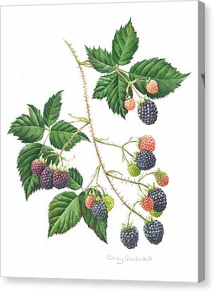 Bramble Canvas Print by Sally Crosthwaite