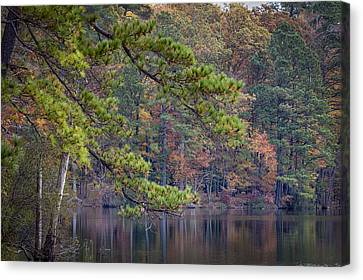 Branches Canvas Print by David Cote