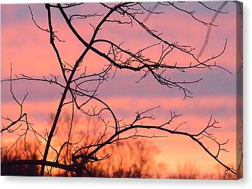 Canvas Print featuring the photograph Branches Meet The Sky by Dacia Doroff