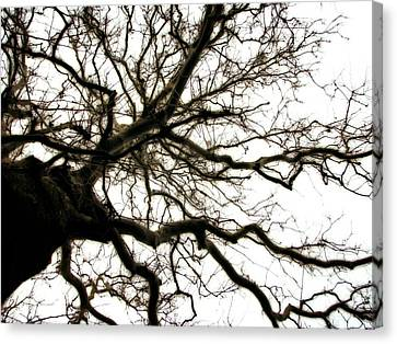 Branches Canvas Print by Michelle Calkins