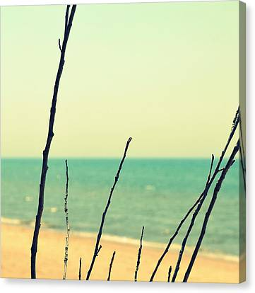 Branches On The Beach Canvas Print