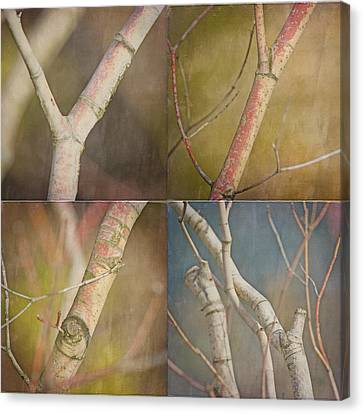 Branches Times Four Canvas Print by Bonnie Bruno
