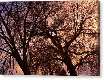 Branching Out At Sunset Canvas Print by James BO  Insogna