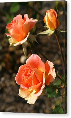 Brass Band Roses In Autumn Canvas Print