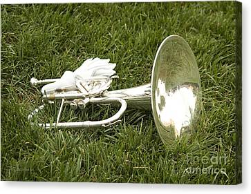 Canvas Print featuring the photograph Brass In Grass by Carol Lynn Coronios