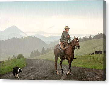 Angus Canvas Print - Braving The Rain by Todd Klassy