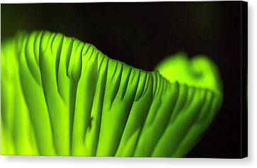 Brazilian Coconut Flower Mushrooms Glow Canvas Print by David Liittschwager