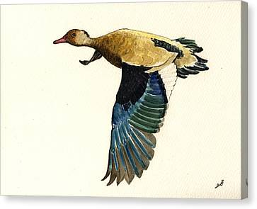 Brazilian Teal Or Brazilian Duck Amazonetta Brasiliensis Canvas Print by Juan  Bosco