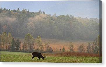 Breakfast In Cades Cove Canvas Print by Dan Sproul
