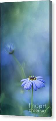 Aperture Canvas Print - Breathe Deeply by Priska Wettstein