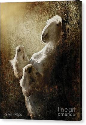 Breathless Canvas Print by Dorota Kudyba