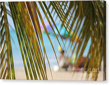 Summer Breeze Canvas Print by The Art of Alice Terrill