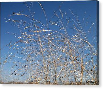 Canvas Print featuring the photograph Breeze by Sara  Raber